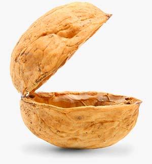 nut-shell